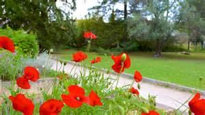 Jardin Des Plantes Montpellier Primavera by Jardin Des Plantes De Montpellier In Montpellier