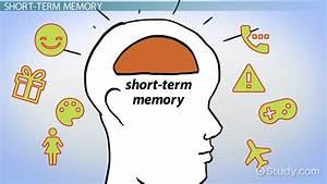 Atkinson & Shiffrin's Modal Model of Memory - Video ...