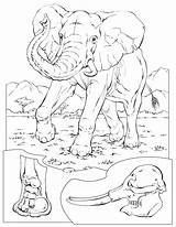 Coloring Pages Elephant Animals Animal Sheets Printable National Geographic Wildlife Conservation African Adult sketch template