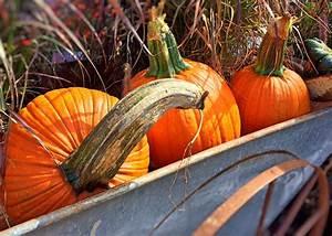 Autumn, Pumpkin, Wallpaper, 47, Images