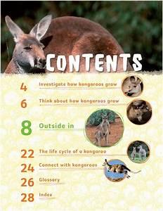 Investigate  Kangaroos