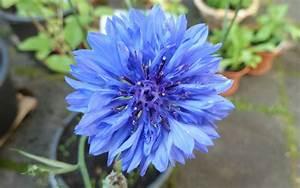 Getrocknete Blüten Kaufen : essbare bl ten mehr als ein augenschmaus ~ Orissabook.com Haus und Dekorationen