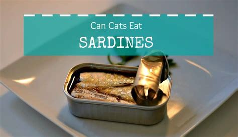 can cats eat sardines with bones