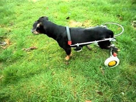 hunderollwagen gehhilfe fuer hunde youtube