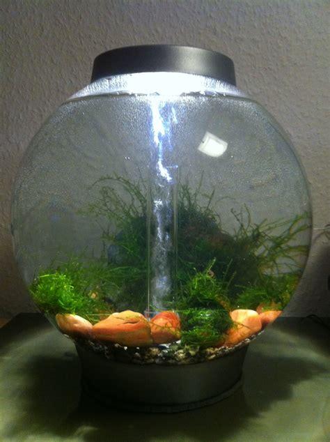 mein neues projekt ein biorb aquarium miniwasserwelt