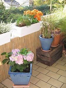 Sichtschutz Für Den Balkon : sichtschutzmatten witterungsfeste schilfmatten f r ihren balkon ~ Watch28wear.com Haus und Dekorationen