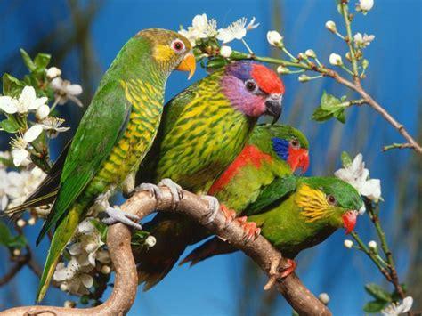wallpapers birds wallpapers free