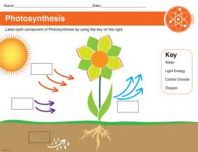 Photosynthesis Diagram Worksheet Answers Printable Photosynthesis Worksheet Black Decker Laminating