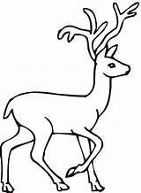 Deer Coloring Pages Drawing Buck Easy Animals Clipart Print Doe Printable Tailed Forest Animal Draw Sheet Clip Whitetail Wildlife Popular sketch template