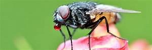Comment Chasser Les Mouches : chasser les mouches 5 astuces utiles pour chasser les ~ Melissatoandfro.com Idées de Décoration