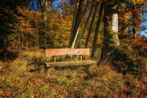 imagen gratis paisaje banco hoja madera naturaleza