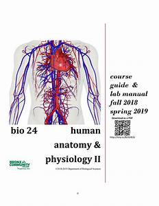 Bio24 F17-s18 Complete Course Guide By Human Anatomy