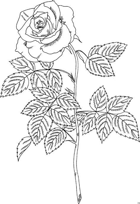 pailine skizziert ausmalbild malvorlage blumen