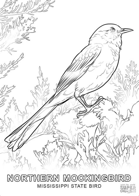 bird coloring pages coloringbay