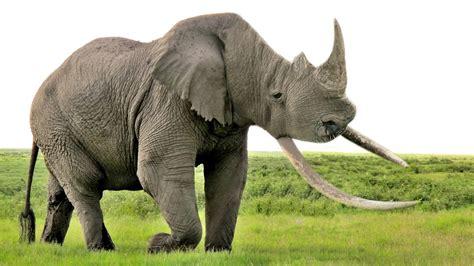 Redditors Create Fictional Hybrid Animals Unusual