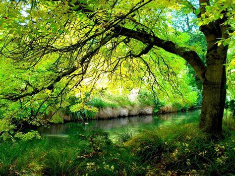 horace wood river coast grass wallpaper hd wallpaperscom