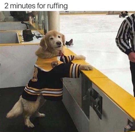 funny dog wearing  shirt luvbat