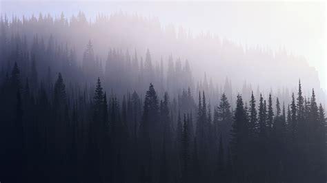 Foggy Forest Wallpaper Wallpapersafari