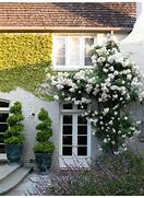 Indoor Climbing Plants  Interior Design Ideas