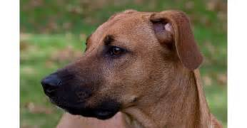 5 facts about the black cur animalso