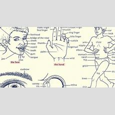 English Vocabulary Parts Of The Human Body  Eslbuzz Learning English