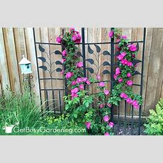 20 Excellent Trellis Plants For Your Garden  Get Busy