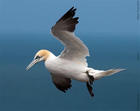 Scientists Predict Where Seabirds Forage Birdguides