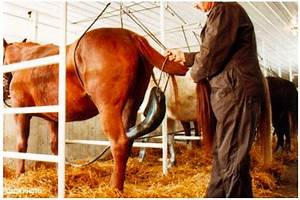 Petition · Pfizer: Take horse urine out of hormone ...