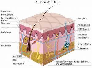 Sekundenkleber Auf Der Haut : medizin symptome ~ A.2002-acura-tl-radio.info Haus und Dekorationen