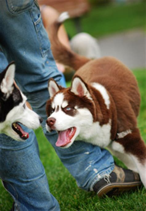 Your Puppy What To Expect At  Months
