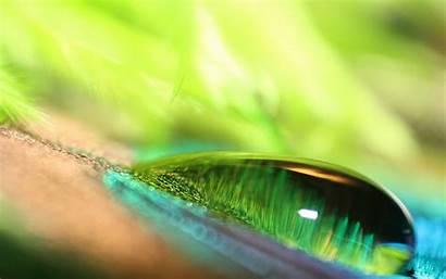 Water Drop Dew Wallpapers 4k Desktop Backgrounds