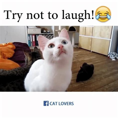 Laughing Cat Meme 25 Best Memes About Laughing Cat Laughing Cat Memes