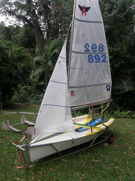 sailing flying ant photo