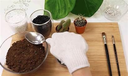 Soil Terrarium Potting Cactus Singapore Workshops Handy