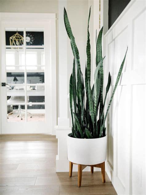 Le piante grasse possono rendere gli ambienti molto più accoglienti: Le piante d'appartamento più belle per arredare la casa ...