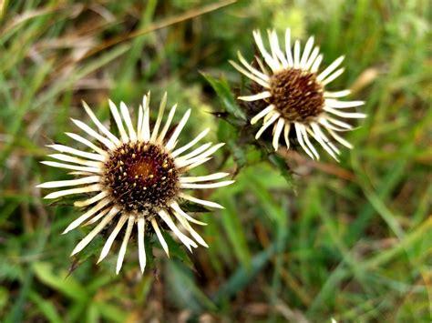 Čužu purva taka - interesantu augu bagātība   Uzzini ...