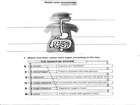 respiratory system fill in the blank worksheets