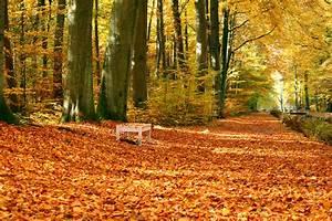 Kostenlose Bilder Herbst : kostenlose foto baum wald sonnenlicht blatt park bunt jahreszeit bank abscheulich ~ Yasmunasinghe.com Haus und Dekorationen