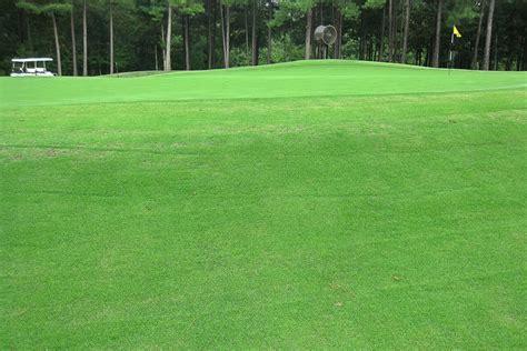 zoysia geo sod grass lawn shade maintenance grasses tolerant turfgrass related