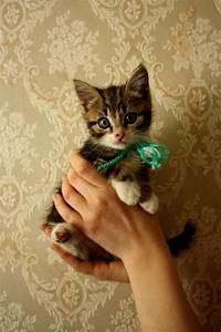 15 really cute kittens 4   Kitty Bloger