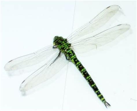 jeudi sur les ailes d une libellule