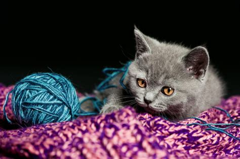 names for grey cats names for gray kittens slideshow