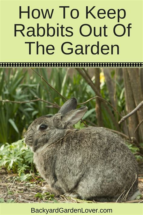 how to keep rabbits out of your garden how to keep rabbits out of the garden 9 easy ways