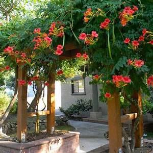 Plante Grimpante Pergola : plante grimpante ombre pour pergola de jardin ~ Nature-et-papiers.com Idées de Décoration