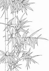 Coloring Bamboo Plant Botanical Printable Ink Drawing Line Flower Drawings Wash Oriental sketch template