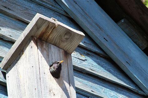 build   bird house   kit