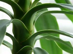 Plante Verte D Appartement : plantes d 39 appartement conseils jardinage famiflora ~ Premium-room.com Idées de Décoration