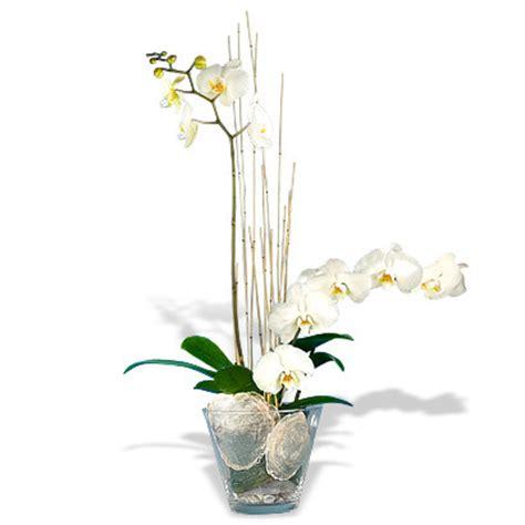 orchideen blumen heller  essen blumen verschicken