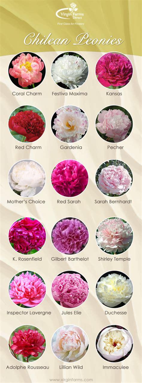 variety names chilean peony season virgin farms