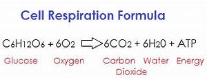 Aerobic Respiration: Definition, Steps, Products ...